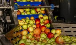 Бизнес-идея: переработка яблок